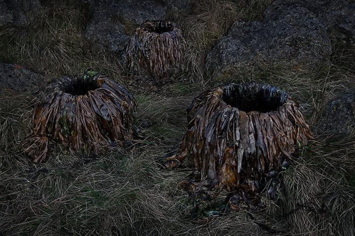 Природа в фотографиях Ellie Davies