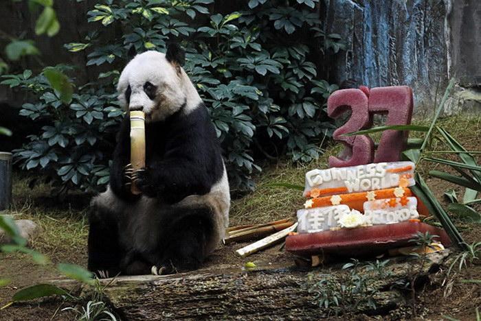 Интересные фотографии животных, сделанные в июле 2015 года