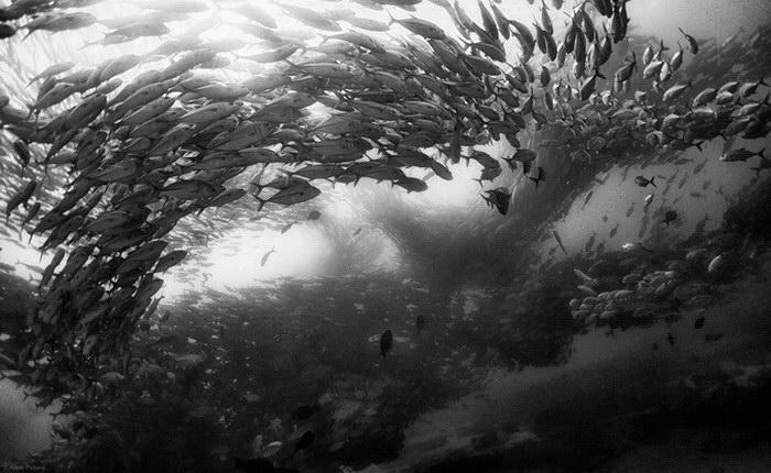Подводное царство Anuar Patjane