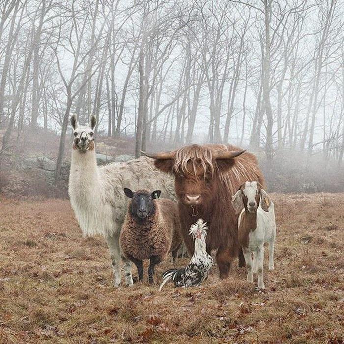 Групповые фотографии животных Rob Macinnis