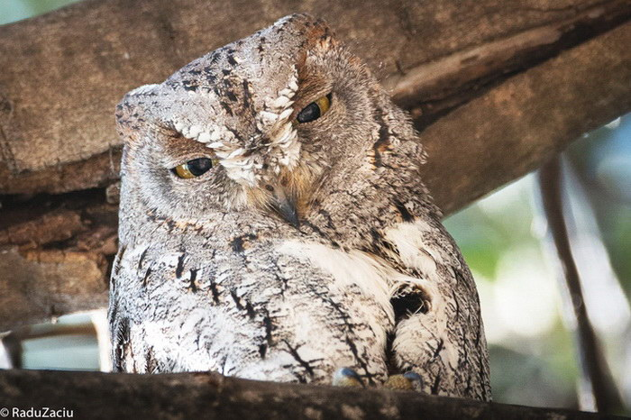 Фотографии животных Radu Zaciu
