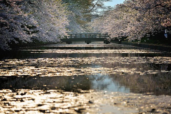 Цветущие деревья в фотографиях Sho Shibata