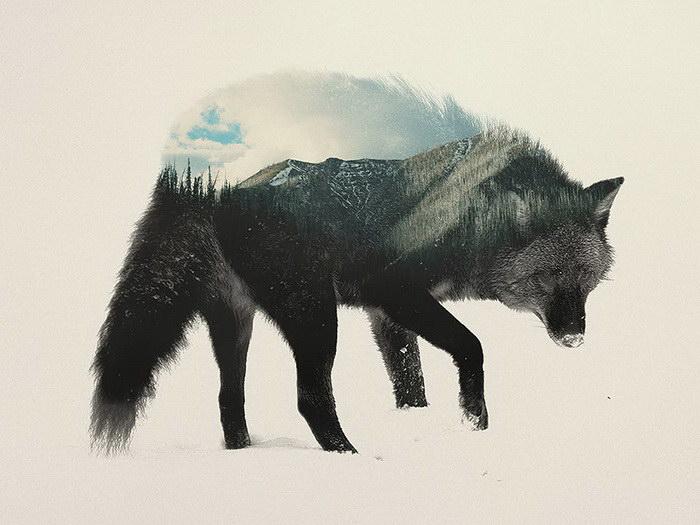 Красивые фото животных Andreas Lie