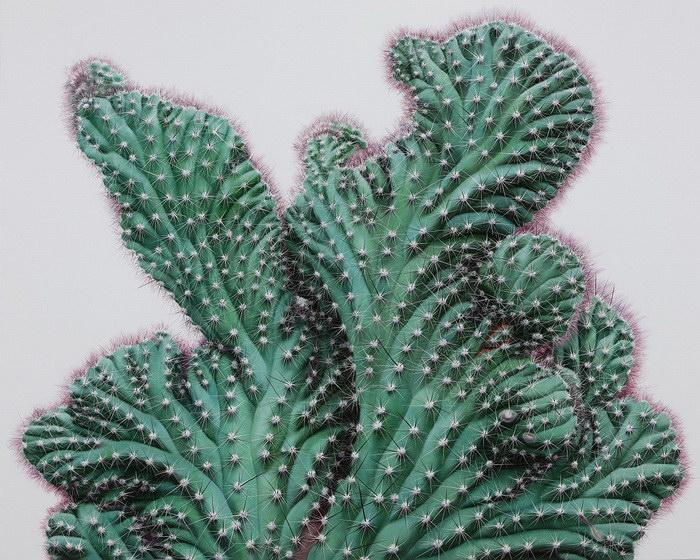 Рисунки кактусов Kwang-Ho Lee