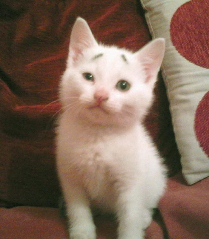 Котенок Гари с очень выразительными бровями