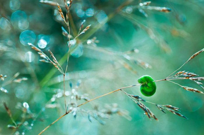 Весенние макро-фотографии Magda Wasiczek