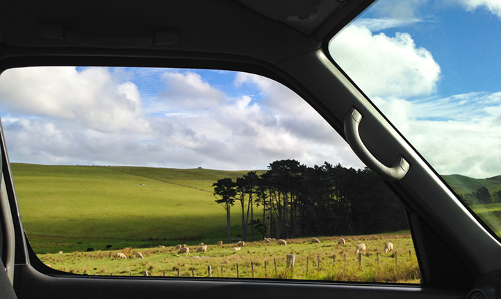 Новая Зеландия из окна минивэна