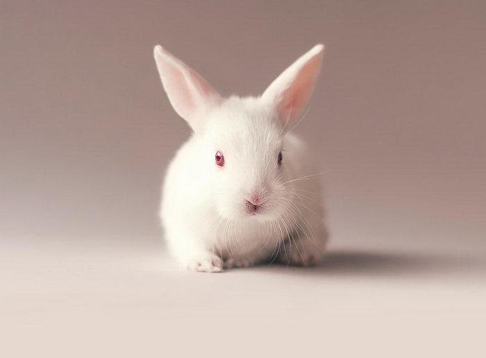 Новорожденный кролик в фотографиях Ashraful Arefin