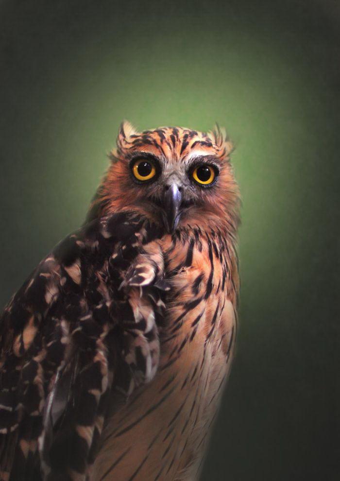 Потрясающие совы в фотографиях Shamma Esoof