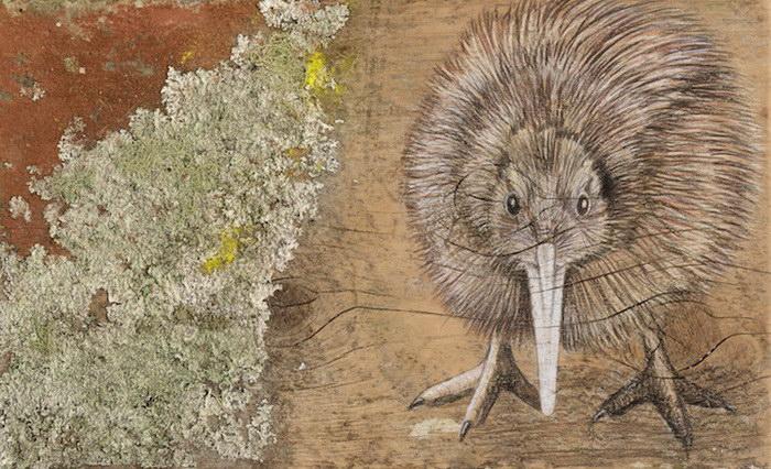 Новозеландские птицы: рисунки John Jepson