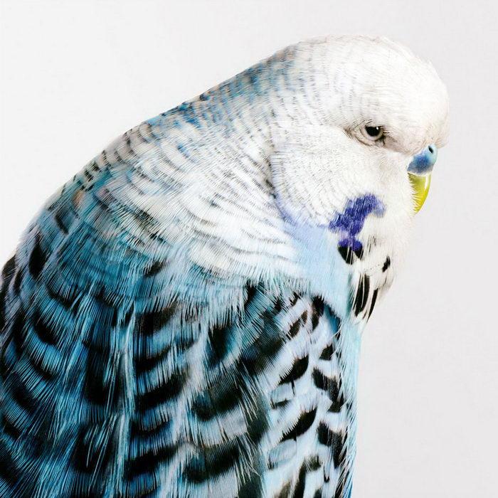 Яркие портреты птиц Leila Jeffreys