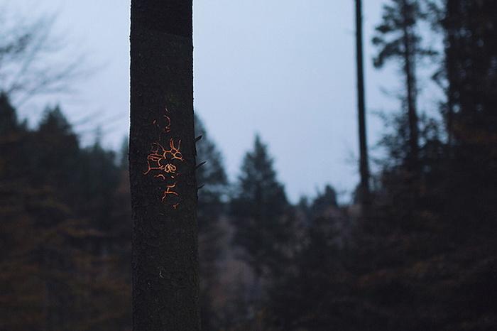 Светящийся лес в видеоролике Friedrich van Schoor