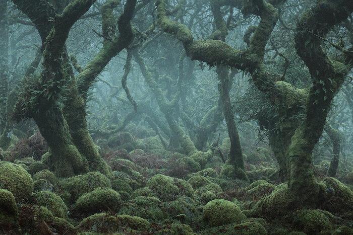 Мистические леса Англии в снимках Neil Burnell