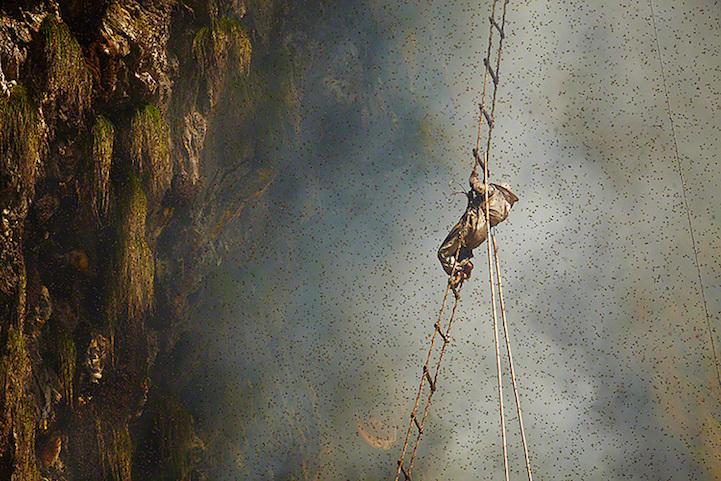 Охота за медом в фотографиях Andrew Newey