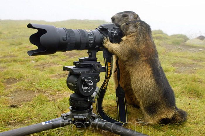 17 фотографий животных-фотографов