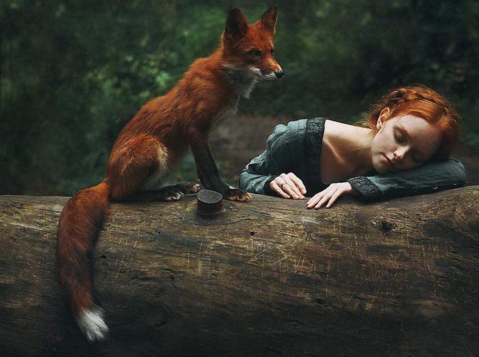 Две лисицы: серия портретов Alexandra Bochkareva