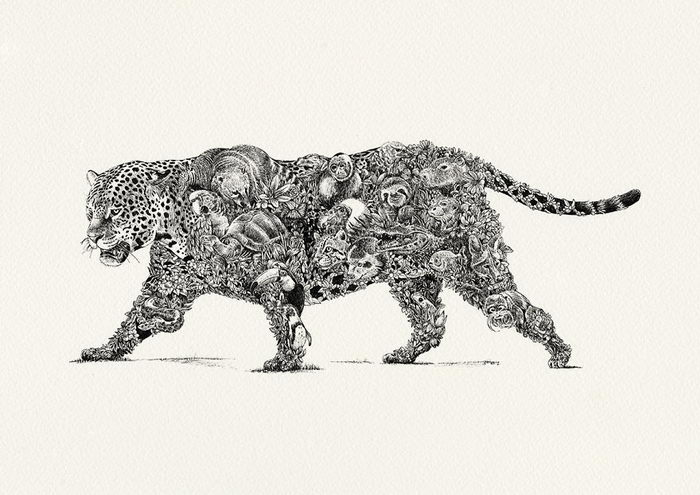 Рисунки животных в их среде обитания Nathan Ferlazzo