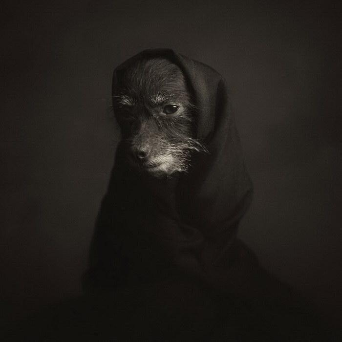 Человечные портреты животных Vincent Legrange