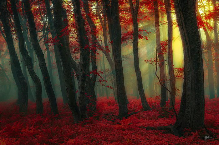 Осенние фотографии Janek Sedlar