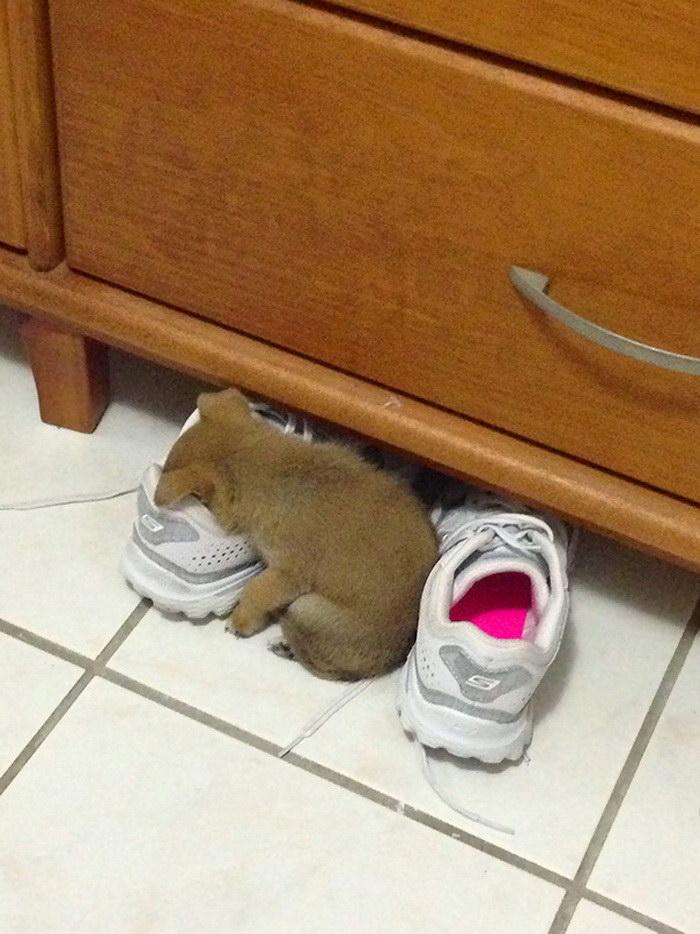 25 щенков, которые могут уснуть где угодно