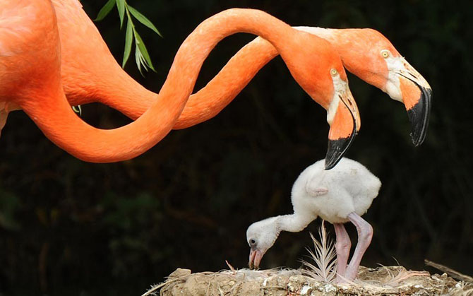 Подборка милых фотографий животных