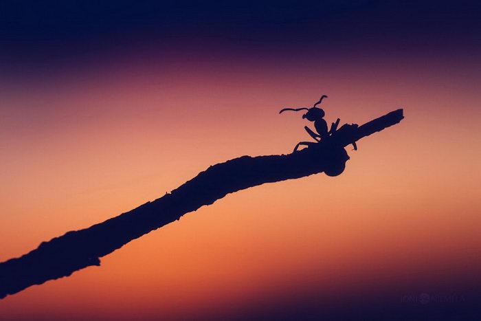 Жизнь муравьев в фотографиях Joni Niemelä