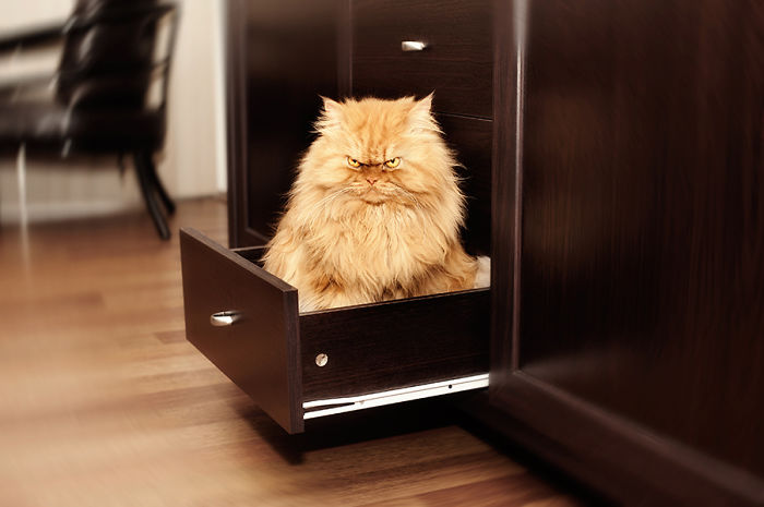 Гарфи — самый злой кот на свете