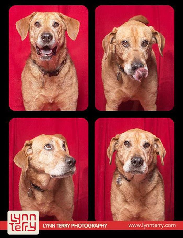 Собаки в фотобудке: фотографии Lynn Terry