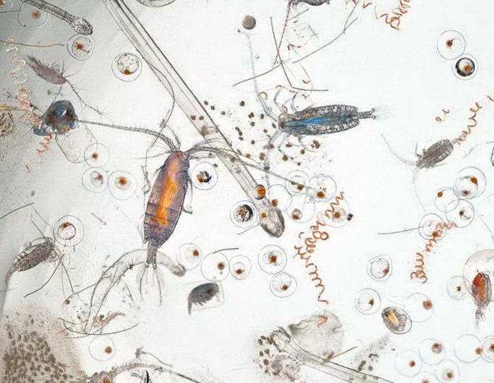 Капля морской воды, увеличенная в 25 раз: брезгливым не смотреть