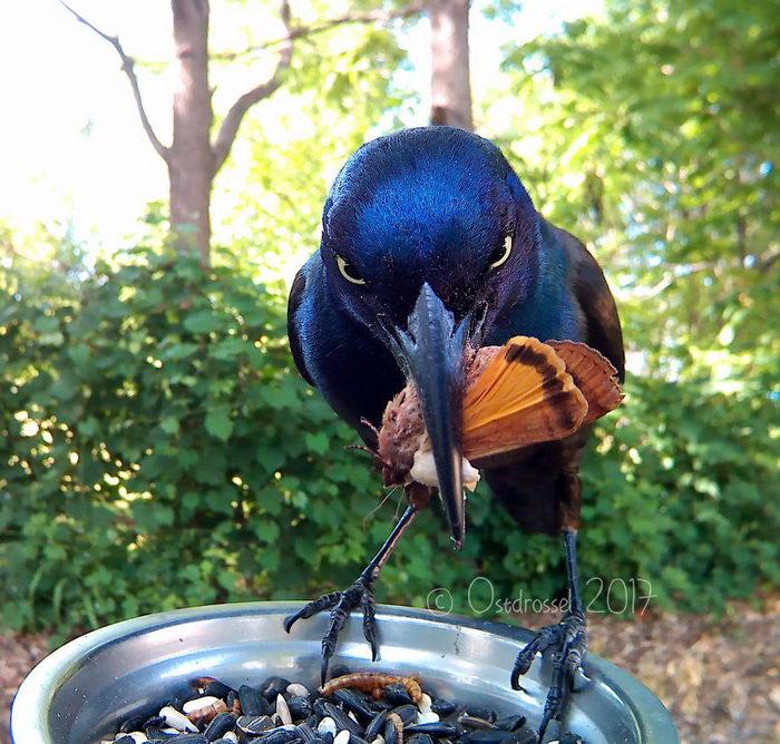 Кормушка для птиц: фотопроект Lisa Ostdrossel