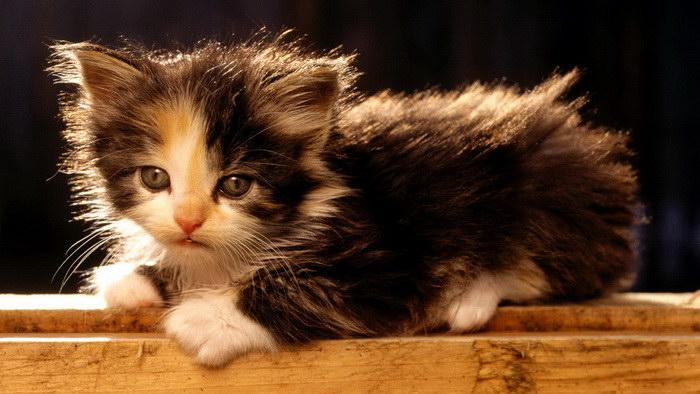 30 котят, которые растопят ваше сердце
