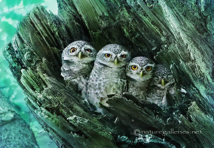 http://img.funtema.ru/07052015/owls/1.jpg