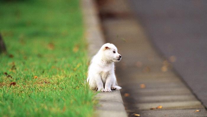 25 мимимишных щеночков