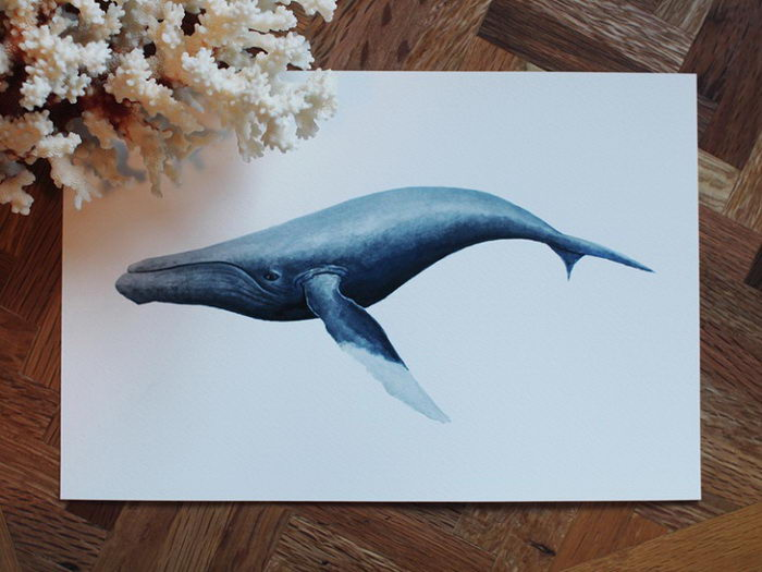 Морские иллюстрации Evelyn Kritler