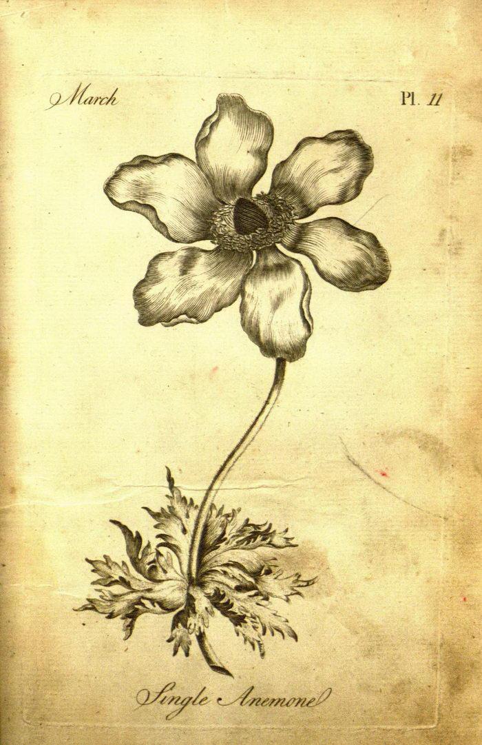 Первая раскраска для взрослых 1760 года выпуска