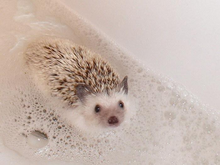 20 животных, которые очень любят принимать ванны
