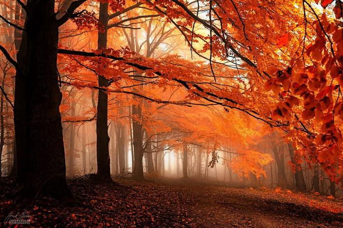 Красота осени в фотографиях Janek Sedlar