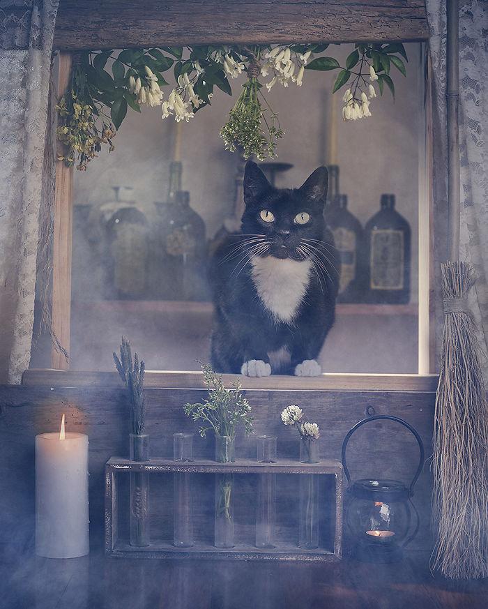 Хэллоуин и кошки: фотографии Catherine Holmes