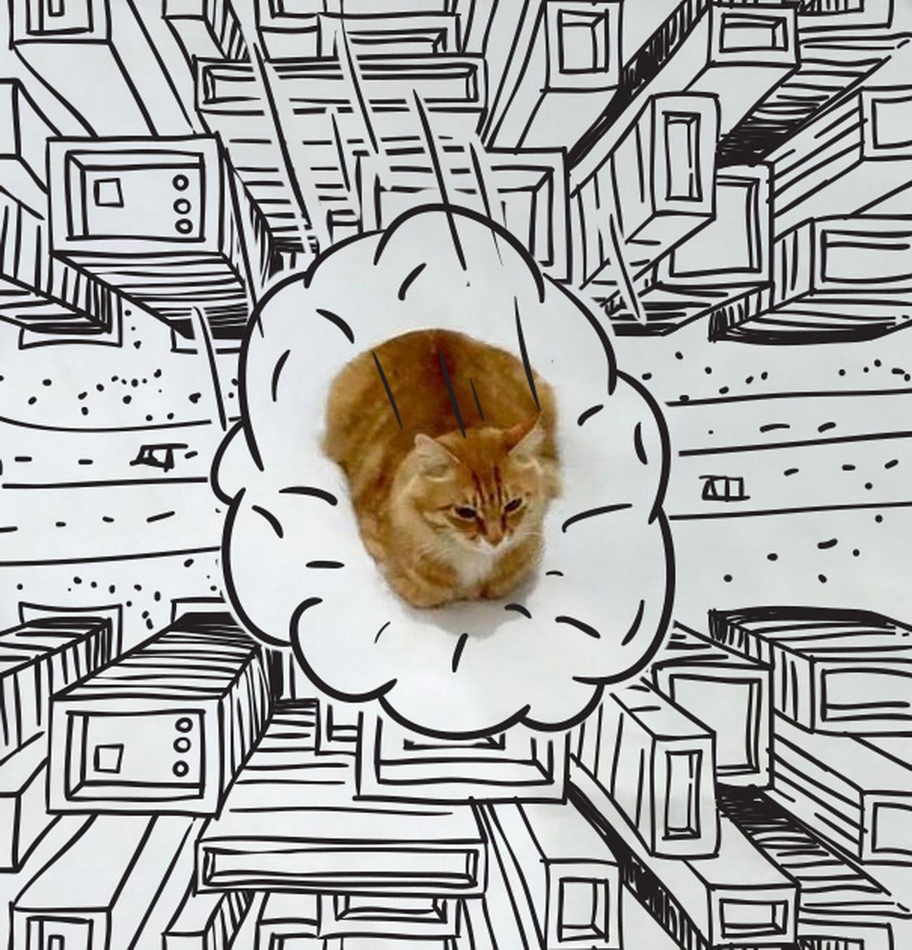 Пририсуй что-нибудь коту: превращение обычной фотографии в смешную картинку