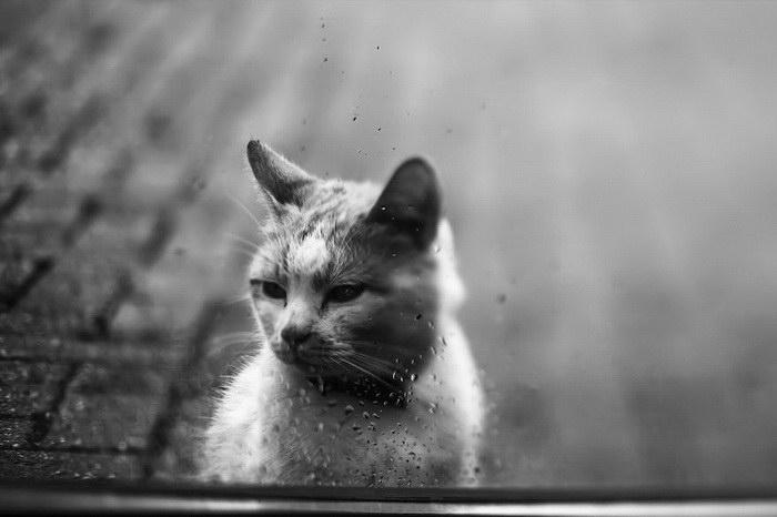 Кошачьи портреты Felicity Berkleef