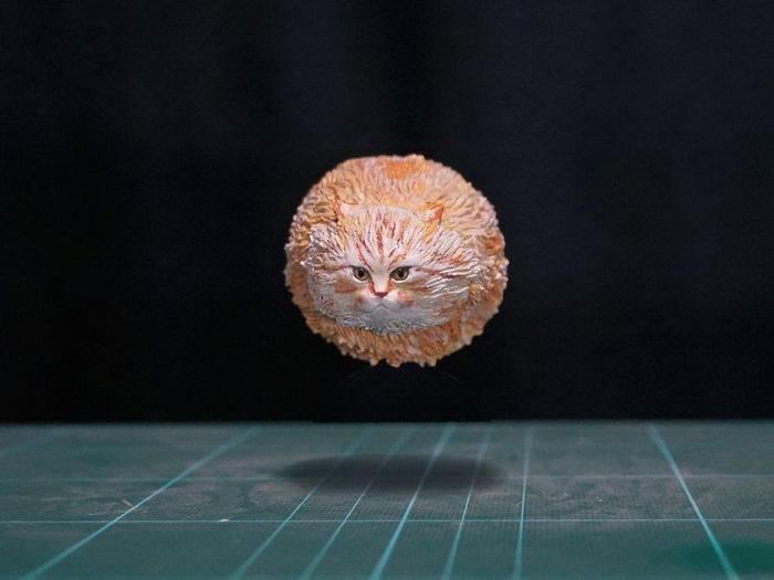 Смешные фото животных в реальность: работы Meetissai