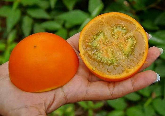 10 самых экзотических фруктов: фото и названия