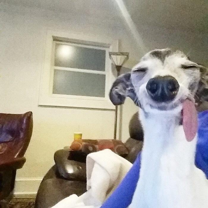 Заппа — очаровательная собака с очень смешной мордочкой