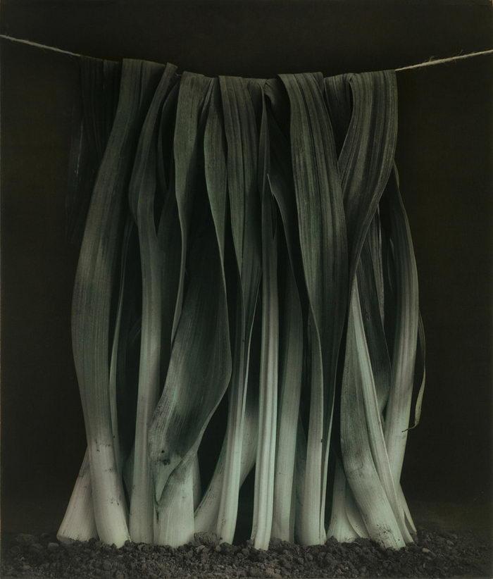 Необычные натюрморты Ingar Krauss