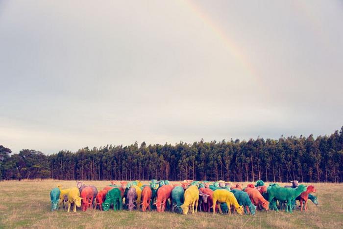 Разноцветные овечки / Животные / Funtema - развлекательная сеть