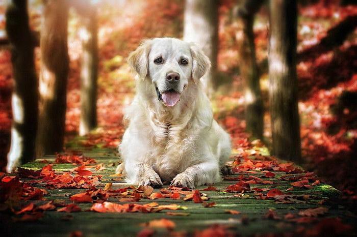 Осенние собаки в фотографиях Gabi Stickler