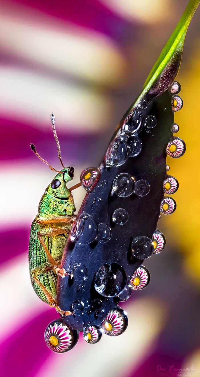 Потрясающие макро-снимки Don Komarechka