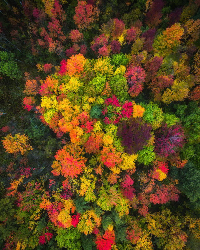 13 снимков осеннего леса в США