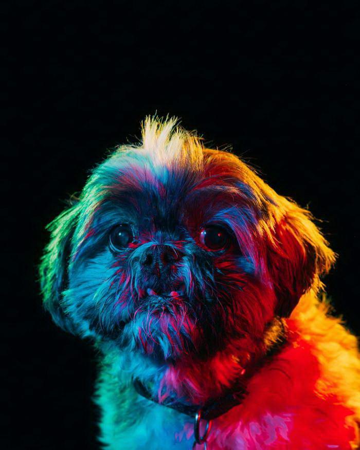 Яркие собаки в фотографиях Paul Octavious