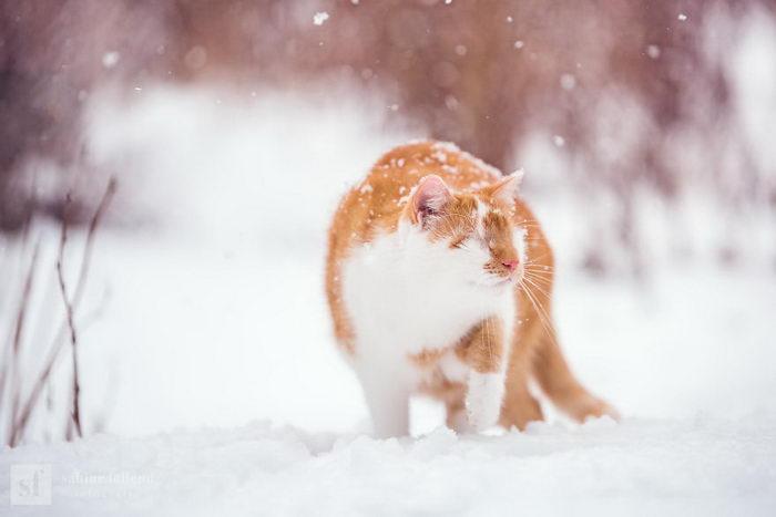 Удивительный слепой кот Kazou